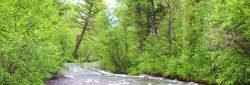 Bridger-Creek-(2)